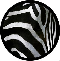 CLOSEOUT - Zebra Design - 6 Inch Fog Light Covers (Pair)