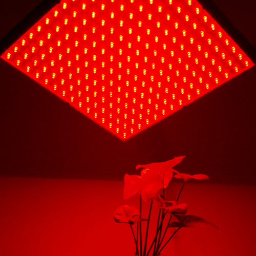 plant for lights beam bulbs light led blue hydroponic angle grow red sized product le vegetables greenhouse regular lighting flowers plants socket