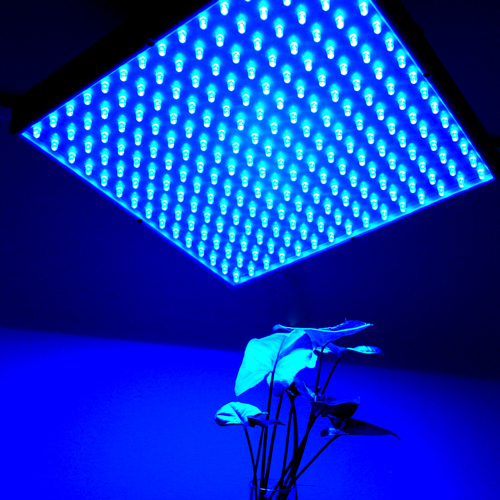 HQRP 225 Blue LED Grow Light Panel for Indoor Grow Green house ...