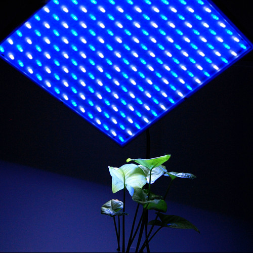 Hqrp 14w 225 Led Blue White Growing Indoor Fruit Flowers
